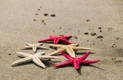 Zeesterren op het zand Royalty-vrije Stock Afbeeldingen
