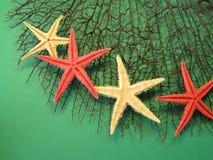 Zeesterren op koraal Royalty-vrije Stock Afbeelding