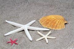 Zeesterren op strandzand Stock Foto's
