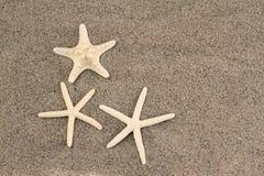 Zeesterren op strandzand Royalty-vrije Stock Afbeelding