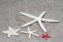 Zeesterren op strandzand Stock Afbeeldingen