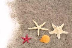 Zeesterren op strandzand Royalty-vrije Stock Foto