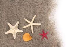 Zeesterren op strandzand Royalty-vrije Stock Afbeeldingen