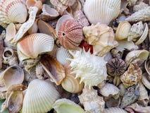 Zeesterren, parels, en verbazende zeeschelpen stock fotografie