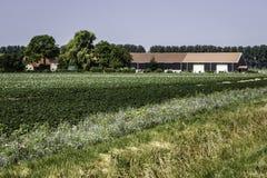Zeeuws ocidental Flanders, os Países Baixos Imagem de Stock Royalty Free