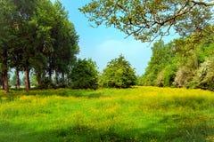 Zeeuws-Vlaanderen乡下,荷兰 库存照片