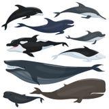 Zeevaartinzameling van verschillende onderwater grote vissen en zoogdierendieren vector illustratie