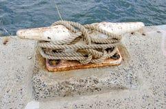 Zeevaartmeertros Stock Foto