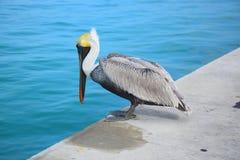 Zeevogel royalty-vrije stock afbeeldingen