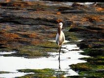 Zeevogel in de zomer stock foto's
