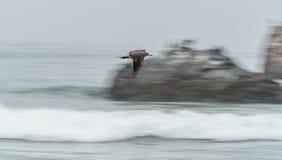 Zeevogel die langs kust vliegen Stock Afbeelding