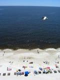 Zeevogel die over strand stijgt Stock Fotografie