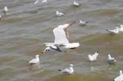 Zeevogel witte Zeemeeuw Stock Afbeelding