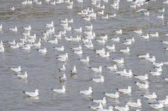 Zeevogel witte Zeemeeuw Royalty-vrije Stock Foto's