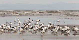 zeevogels Royalty-vrije Stock Foto