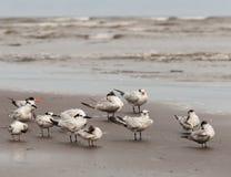 zeevogels Royalty-vrije Stock Afbeeldingen