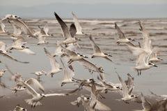 zeevogels Stock Afbeelding