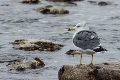 Zeevogels Stock Foto