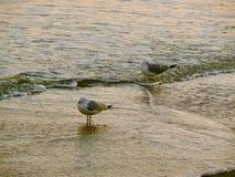 Zeevogels bij Zonsondergang stock afbeeldingen