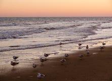 Zeevogels bij Zonsondergang royalty-vrije stock afbeelding