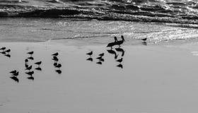 Zeevogels en schaduwen bij hoogtijd royalty-vrije stock fotografie