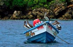 Zeevogels op Tobago royalty-vrije stock foto's