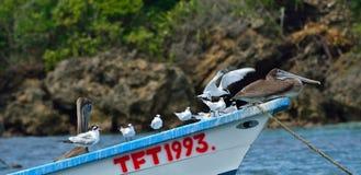Zeevogels op Tobago royalty-vrije stock fotografie