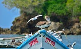 Zeevogels op Tobago stock fotografie