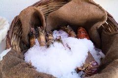 Zeevruchten in backet Stock Foto's