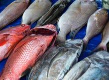 Zeevruchten bij vissenmarkt royalty-vrije stock foto