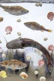 Zeevruchten en vissen in ijsblokje worden bevroren dat De achtergrond van het ijs De textuur van het ijs Stock Afbeelding