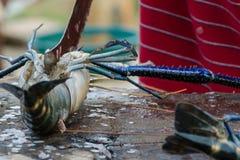Zeevruchtenbesnoeiingen - het koken langoest Besnoeiingszeekreeft in een markt van straatvissen in Sri Lanka stock foto's