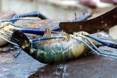 Zeevruchtenbesnoeiingen - het koken langoest Snijd zeekreeft in een markt van straatvissen in Sri Lanka stock afbeeldingen