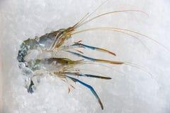 Zeevruchtengarnalen op ijs achtergrond Verse garnalen oceaan gastronomische ruwe garnalen op ijsemmer in de supermarkt stock afbeelding