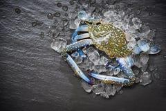 Zeevruchtenkrab op ijs/Verse ruwe Blauwe het Zwemmen Krab oceaan gastronomisch met ijs op dark stock fotografie