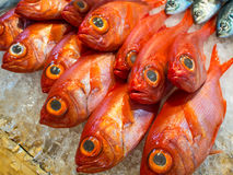 Zeevruchtenproducten bij de Vissenmarkt in Tokyo, Japan Royalty-vrije Stock Foto's
