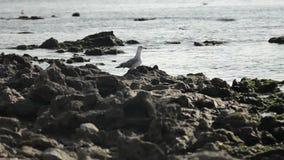 Zeewater kleine golven onder rotsen door de overzeese kusten stock video