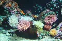 zeewier stock fotografie