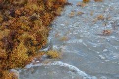 Zeewier die omhoog op het Strand worden gewassen Stock Afbeeldingen