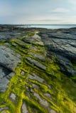 Zeewier en hoogtepunten op rotsen, Constantine Bay, Cornwall royalty-vrije stock afbeeldingen