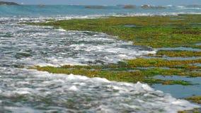 Zeewier en koraalriffen door schuimende oceaangolf wordt gewassen die stock video