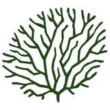 Zeewier gestileerde vectorillustratie Stock Foto