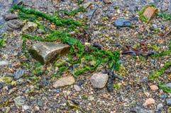 Zeewier, het Noorden, Canada Royalty-vrije Stock Foto