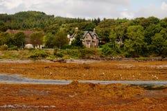 Zeewier op de kust van Skye Stock Foto