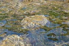 Zeewier op een overzeese bodem royalty-vrije stock afbeelding