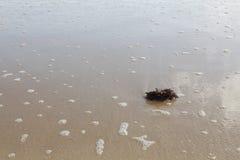 Zeewier op een zandige bodem stock afbeelding