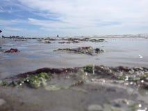 Zeewier op het strand royalty-vrije stock fotografie