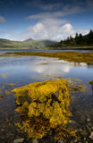 Zeewier op kustlijn Royalty-vrije Stock Fotografie