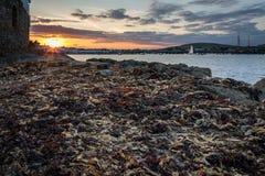 Zeewier op kustweg bij zonsondergang stock foto's