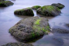 Zeewier op rotsen Stock Foto